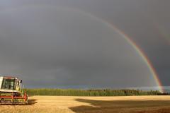 skuronn og regnbue