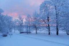 Trær i vinterlys