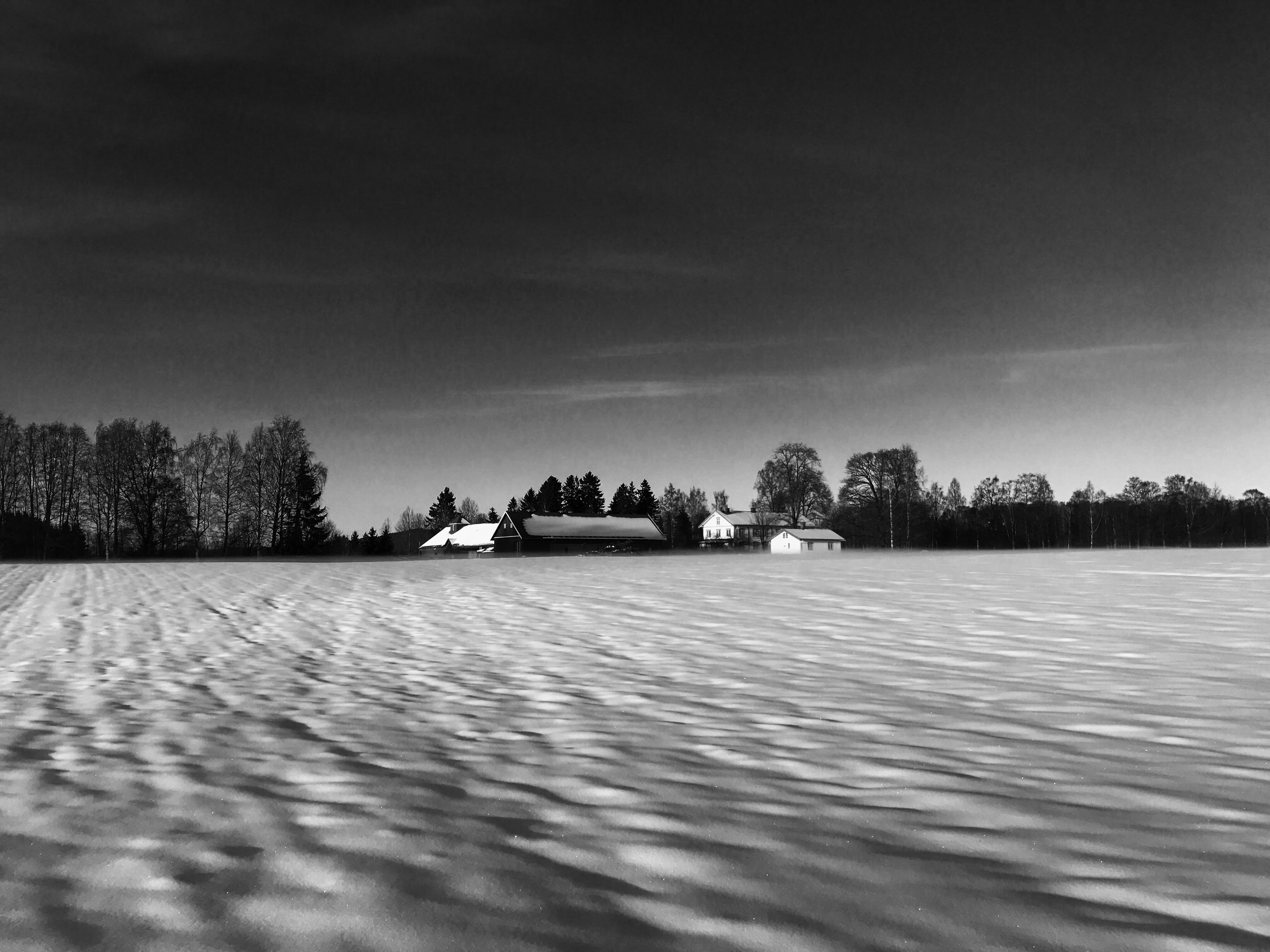 Veset i snølandskap. Foto: Even Gulbrandsen