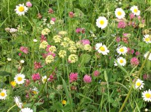 blomsterengIMG_5905